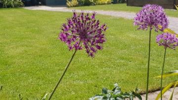 summer garden colour scheme