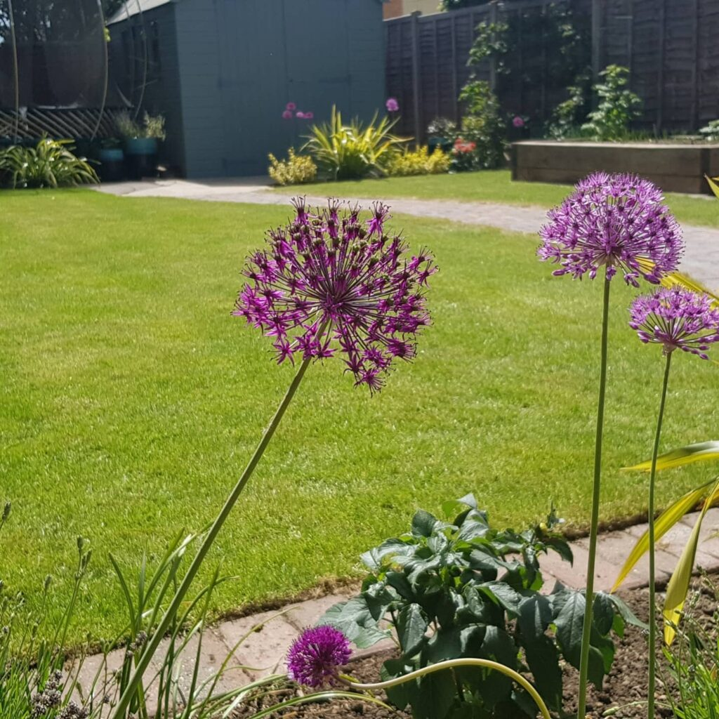 lovely summer garden with green lawns and subtle planting