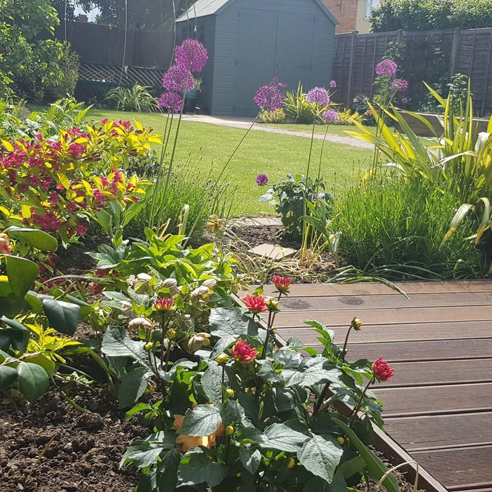 beautiful garden with decking, lawn and planting