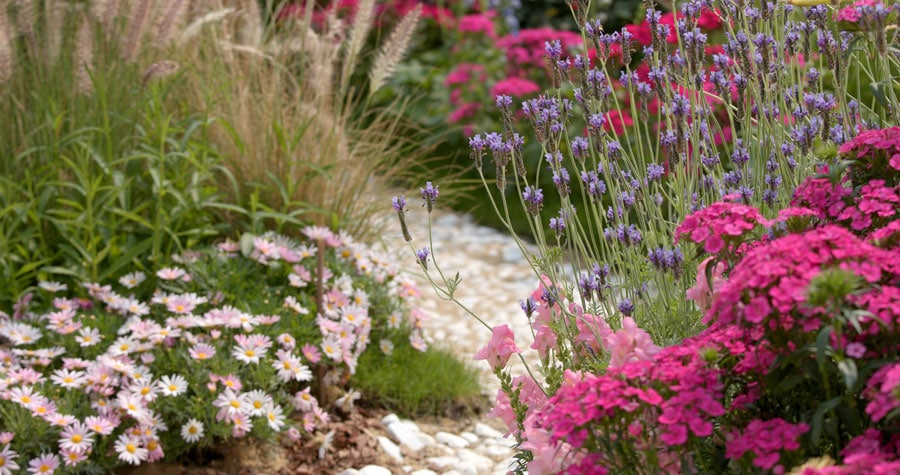 gravel garden with mostly low pollen flowering plants